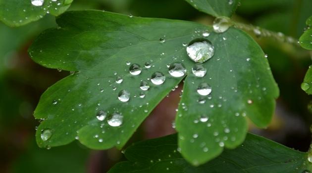 Regenwassernutzung schont die Umwelt